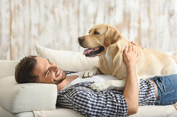 How to have an energetic dog in Boston Apartment